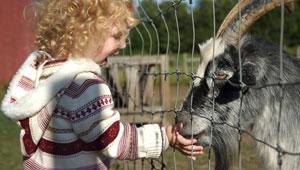 animal and child