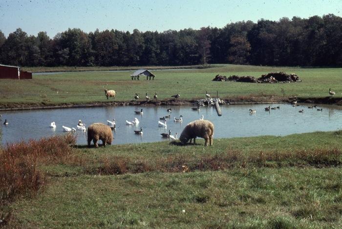 animal pond