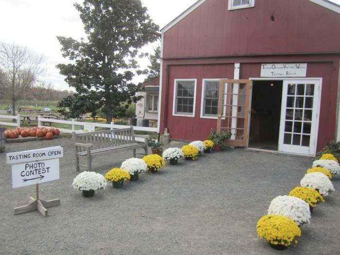 Terhune Orchards wine tasting room mums