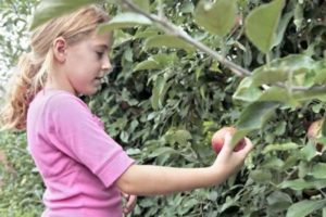 Emily Franceschini picking apples by Robert Stern