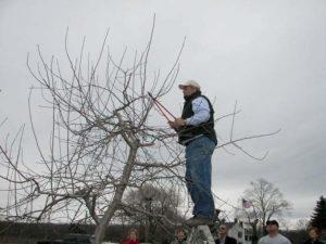 Gary pruning