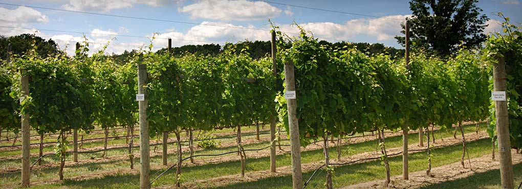 Vineyard4_WineryHomeLarge