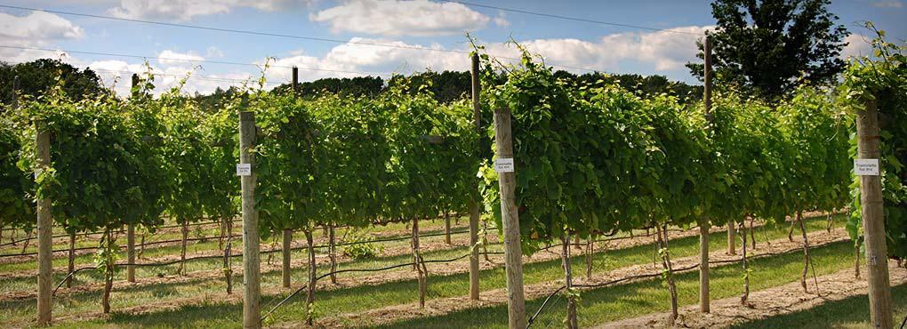 Vineyard4_WineryHomeLarge