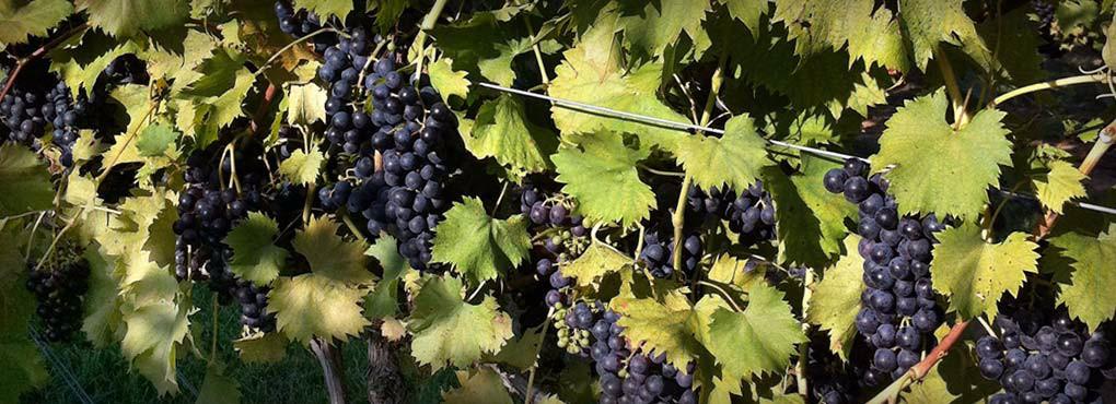 Vineyard5_WineryHomeLarge