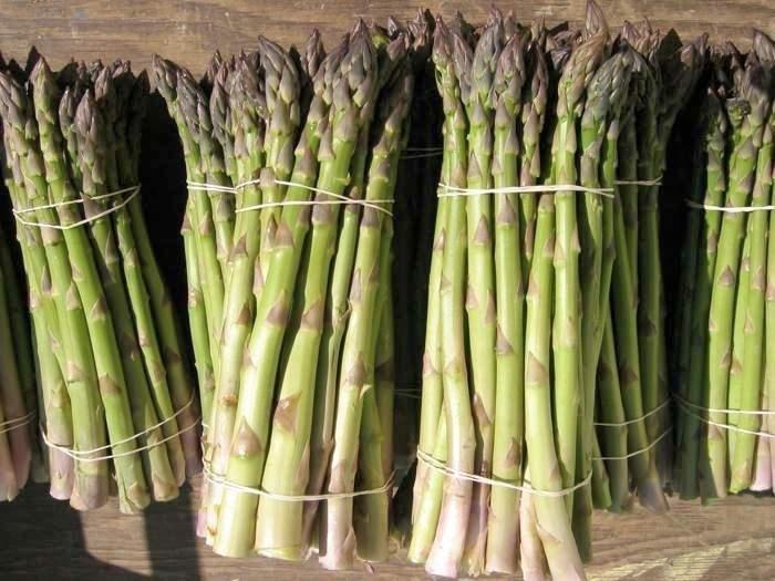 asparagus Terhune Orchards farm