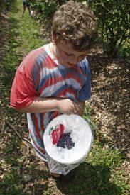 blueberrries