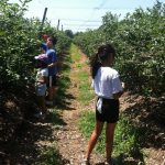 blackberry pick camp