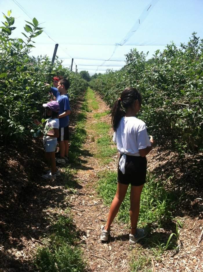 blackberry pick camp