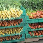 carrots coolveggies