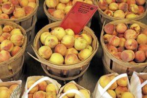 farm store peaches