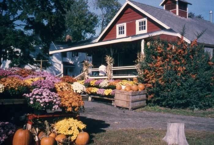 farm store