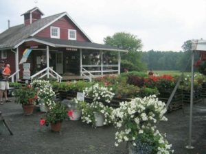 farm store summer baskets