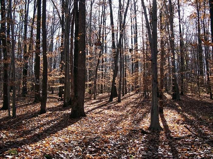 farm woods