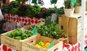 farmer market 5