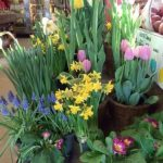 flowers farm store