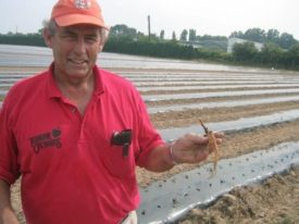Gary Mount strawberries planting Terhune Orchards farm Princeton NJ