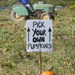 pyo pumpkins