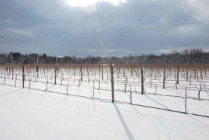 winter Terhune Orchards farm snow Princeton NJ