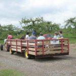 wagon Terhune Orchards farm