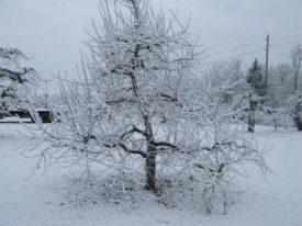 winter snow Terhune Orchards farm Princeton NJ