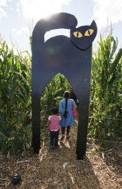 cat corn maze