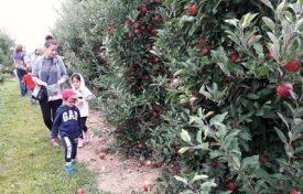 pick apples
