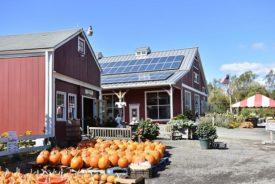 pumpkins tasting room