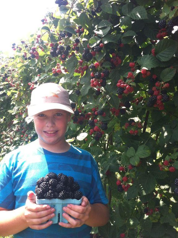 camp blackberry picking