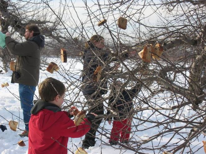 wassail apple trees