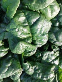summer spinach