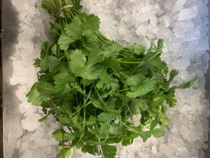 Herb - Cilantro Organic Terhune's own