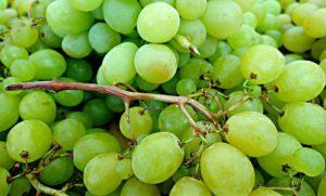 Grapes - Green