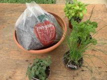 Planter Kit with 4 herbs and soil- Great Gift or Home Project