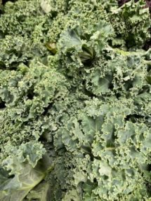 Kale - Green Curly organic Terhune own