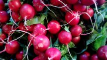 Radish organic Terhune own