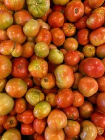 tomatoes field