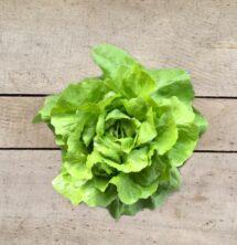 lettuce pot green boston