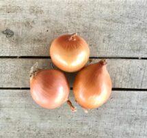onions yellow
