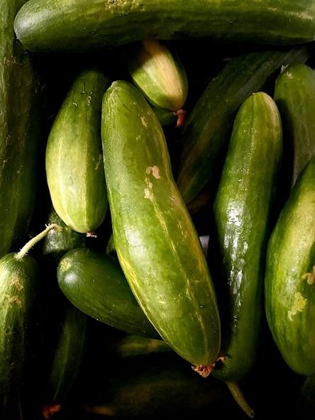 cucumbers english