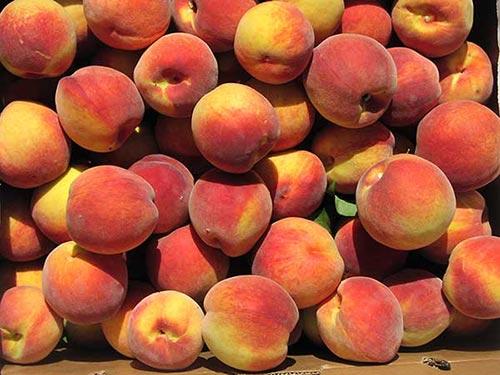 Peaches - Summer