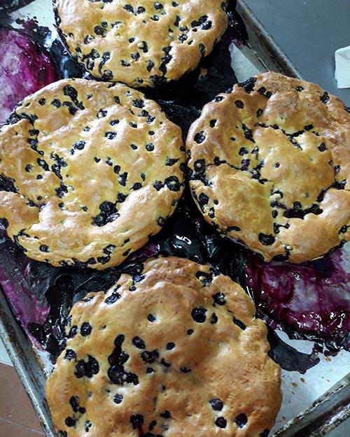 Blueberry Bash