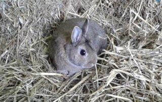Bunny Chase